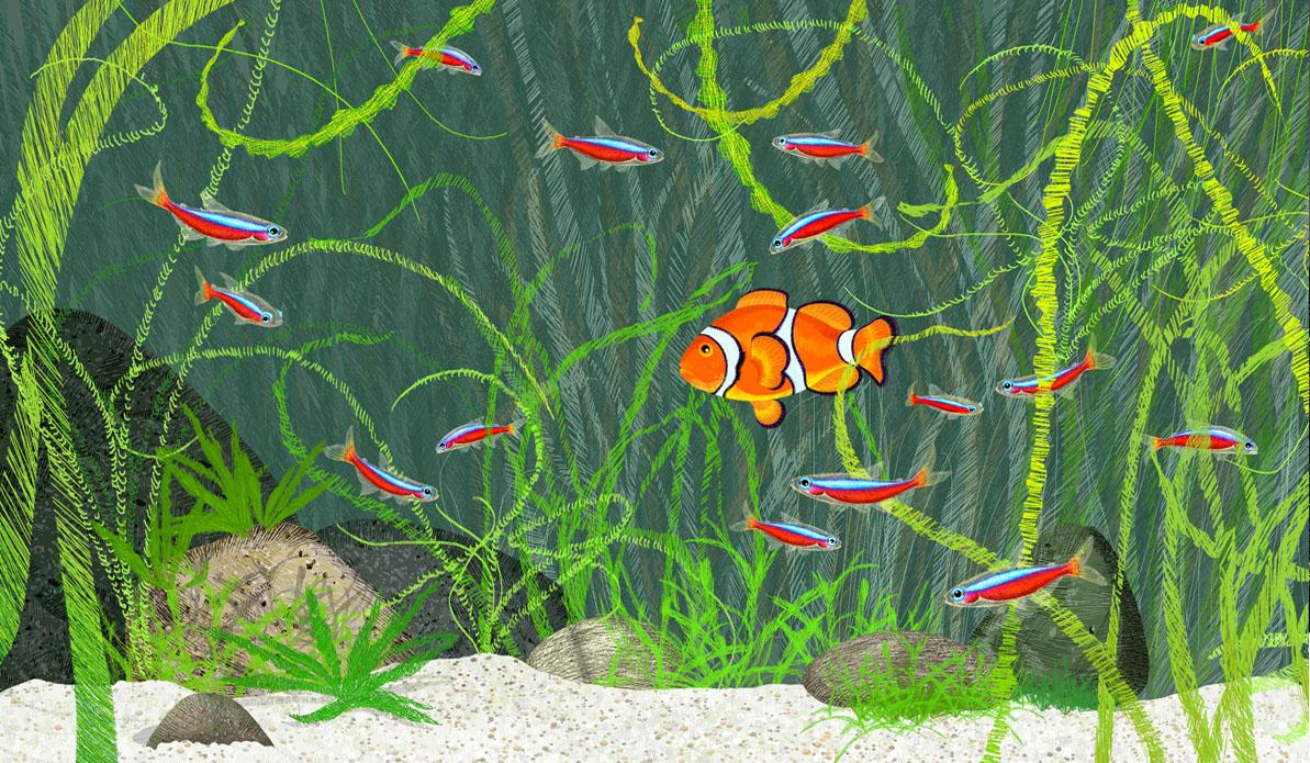 Des poissons pour le mus um aquarium de nancy isabelle for Poisson clown prix