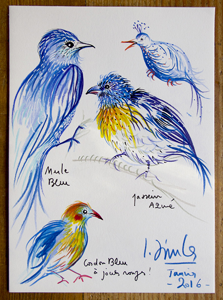oiseaux-bleus
